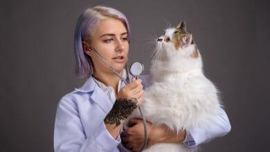 ¿Por qué no deberías estudiar veterinaria?
